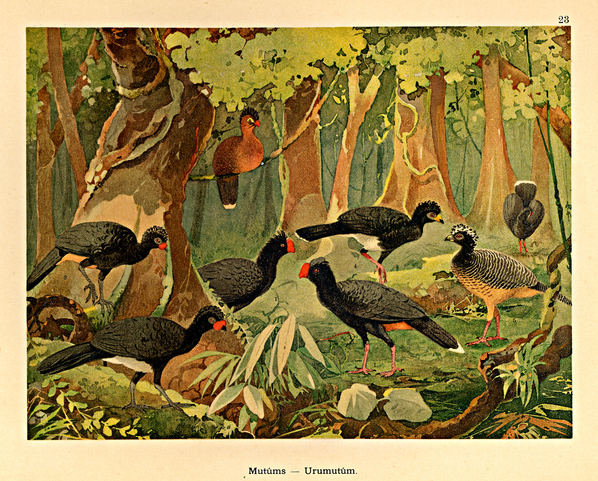 Biodiversity RTR